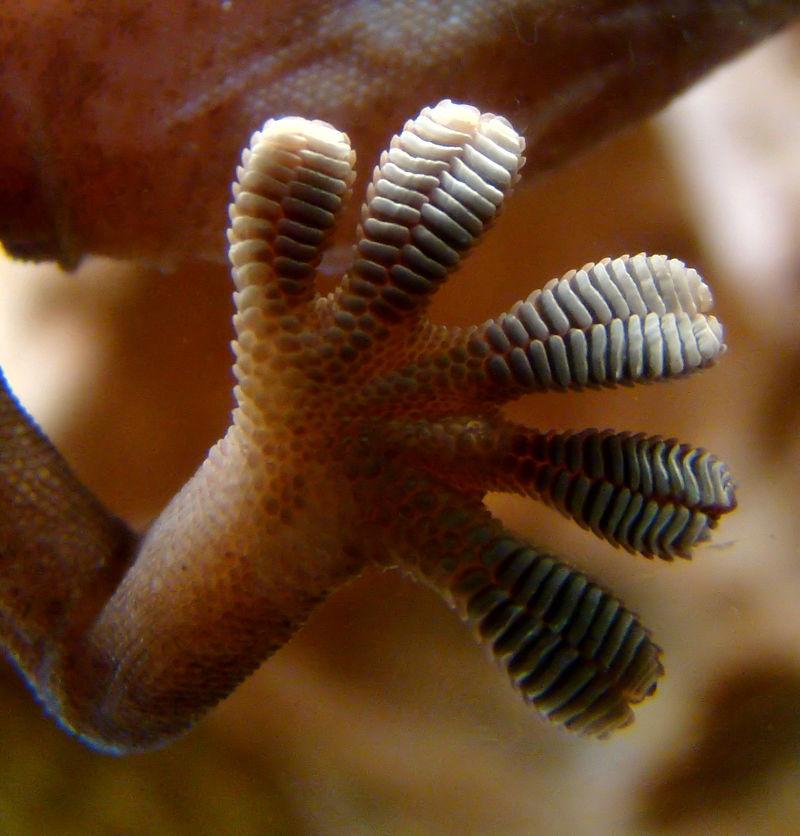 Photo: Kyle Rudolph's fingers